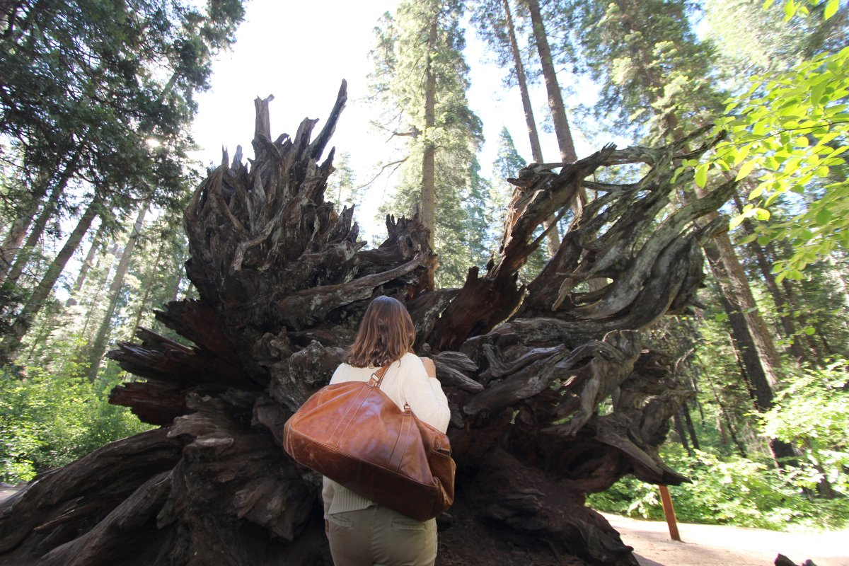 Women stading in from of a large uprooted tree in a forest