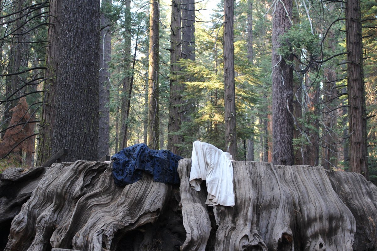 Discarded clothes draped on a masive tree trunk in a forest