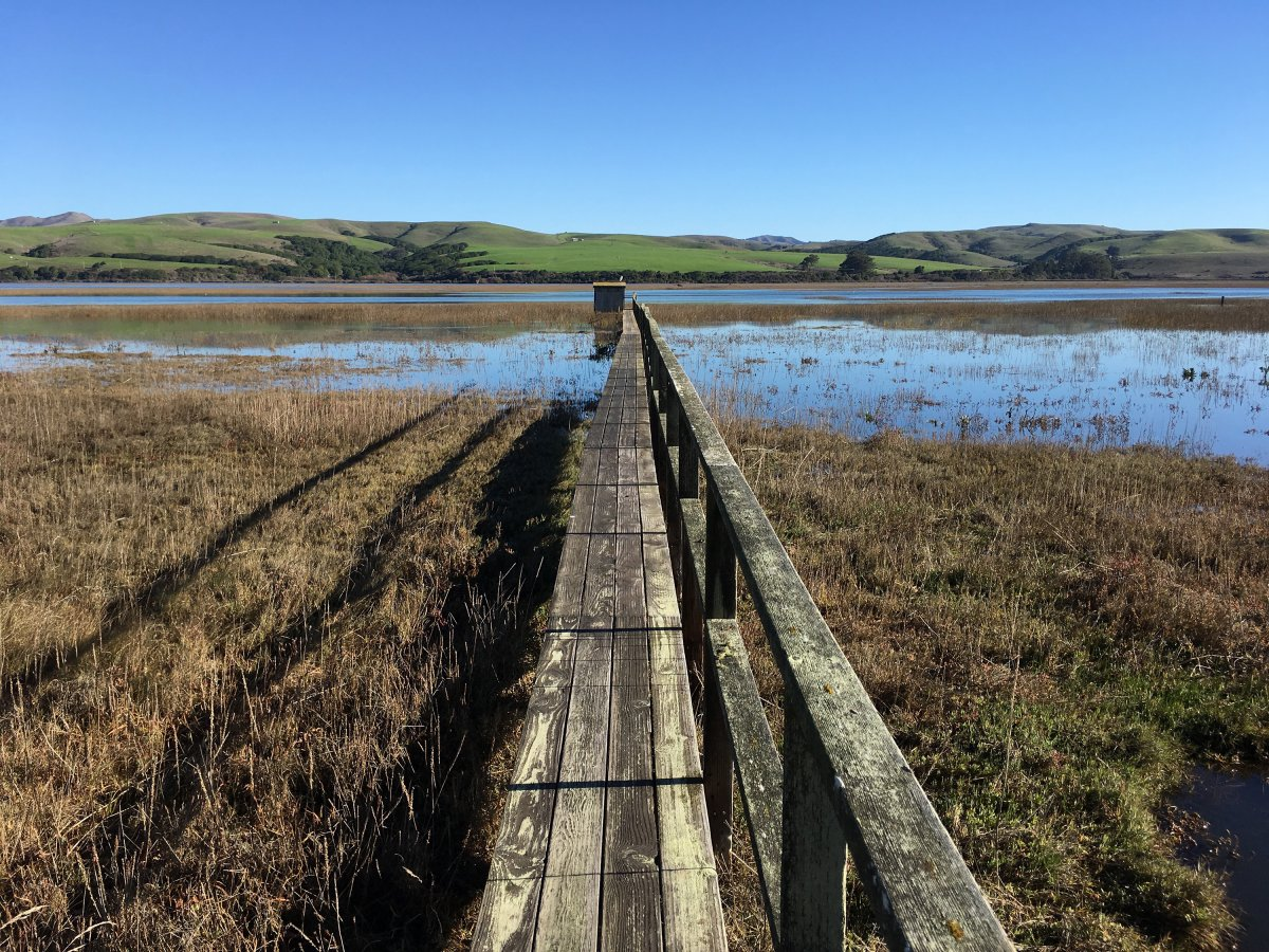 Wooden walkway stretching out into marsh land